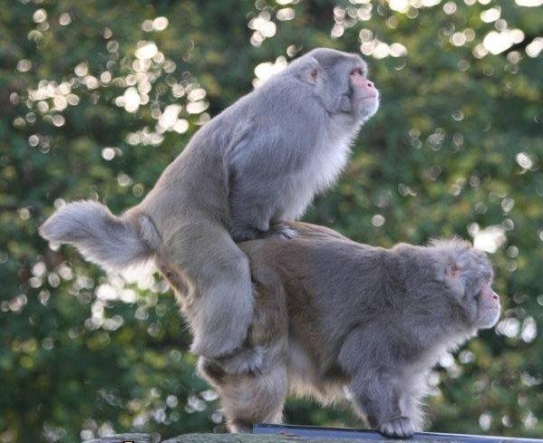 动物的性爱写真 - 海阔山遥 - .