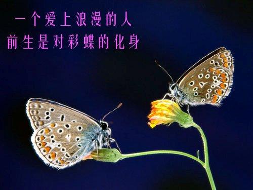 原创:竹蝉讴歌影音《一个爱上浪漫的人》 - 大彬哥 - 姚常平的博客