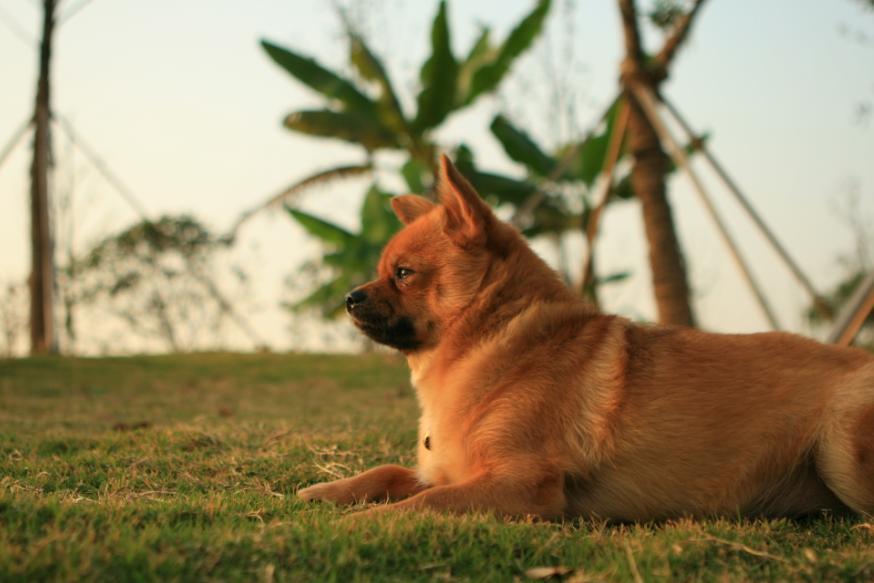 我的小可爱---小怪小肥狗 更新p13 - 猫狗总动员 - 梦