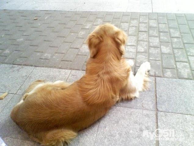 趴着的狗背影简笔画