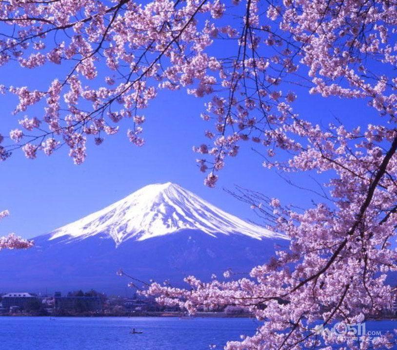 唯美樱花意境图片头像好看的大图,日本人欢迎