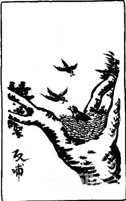 简笔画报答妈妈-第二个星期天是母亲节 乌鸦反哺的故事