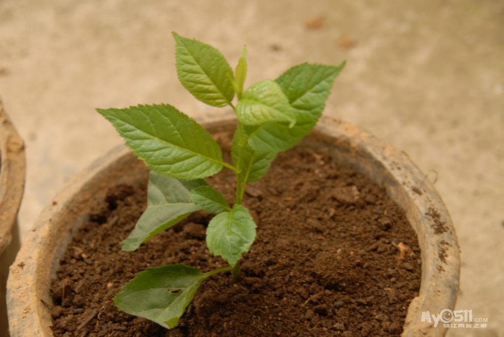 ppt 背景 壁纸 电脑桌面 发芽 绿色 绿色植物 嫩芽 嫩叶 盆景 盆栽