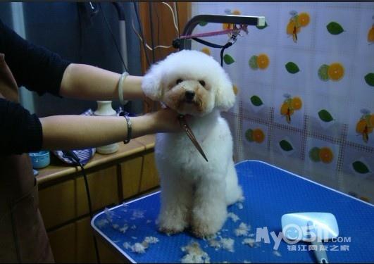 儿童怎么剪动物头型
