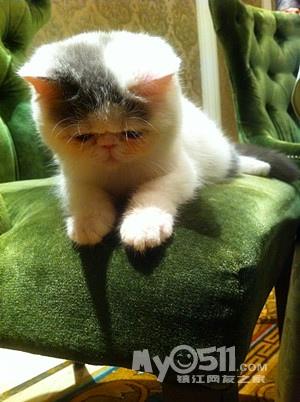 超级可爱的猫猫爪子