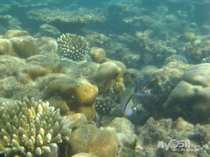 壁纸 海底 海底世界 海洋馆 水族馆 674_505