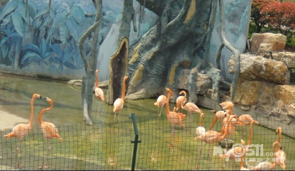 无锡动物园一游 - 东城绿洲幼儿园