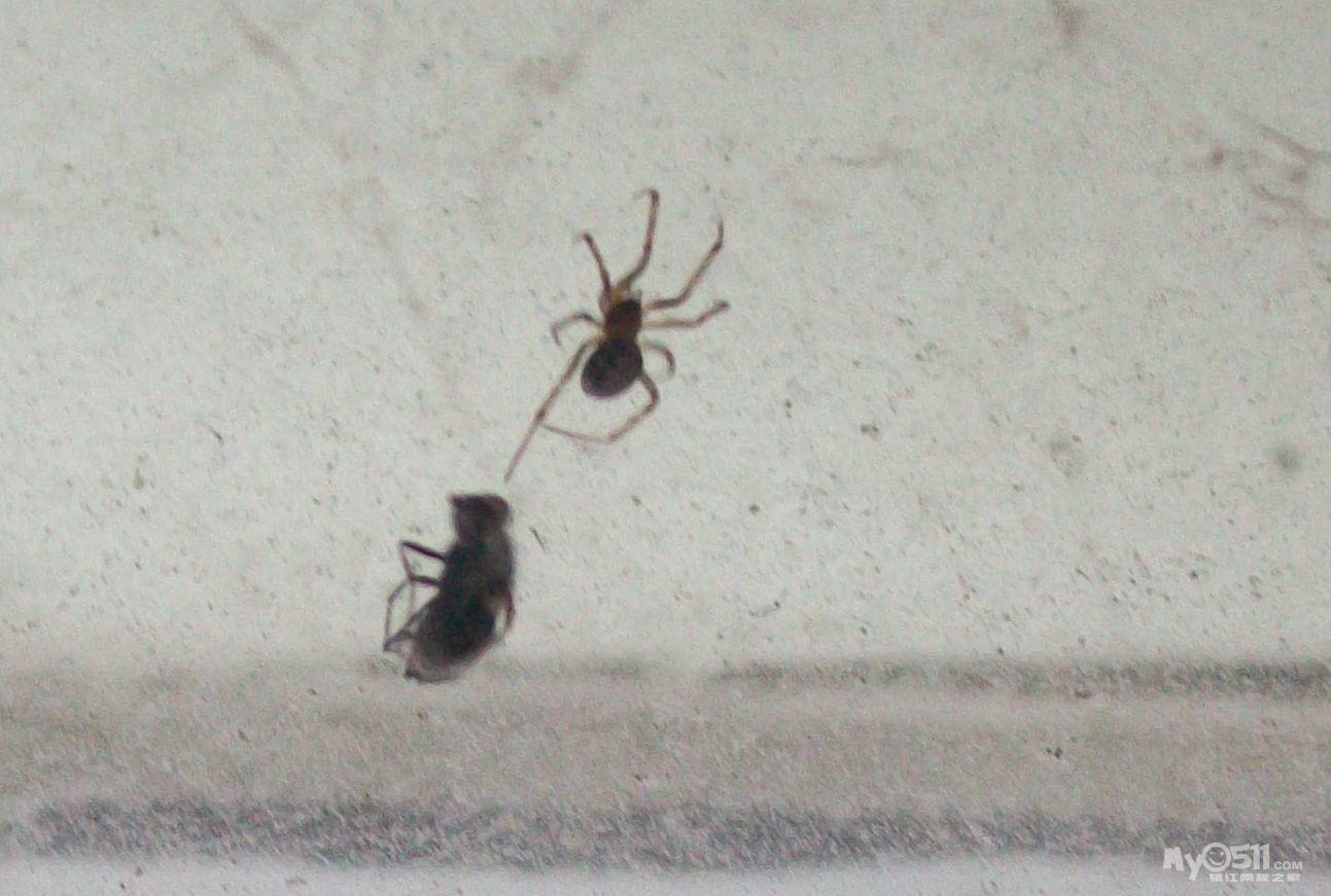 """发几张蜘蛛吃苍蝇的""""剧照"""""""