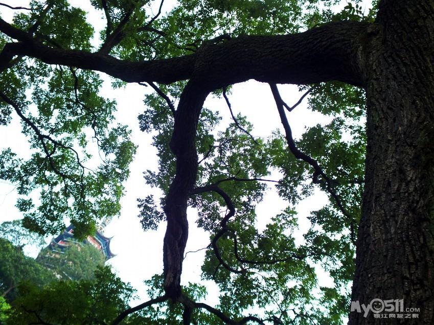 手绘半边树