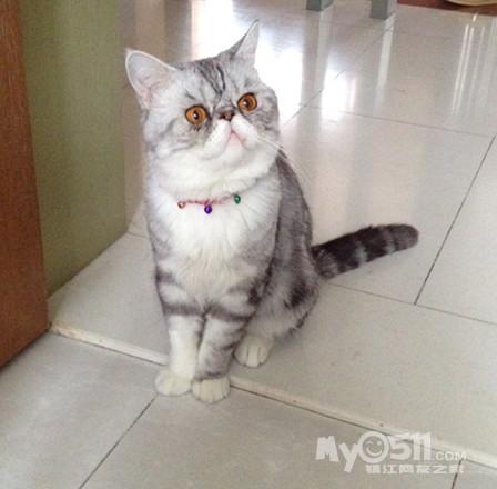 搜索可爱的茶杯猫