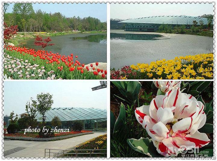 南京中山植物园;; 03 东方剑桥幼儿园《《芽芽2班