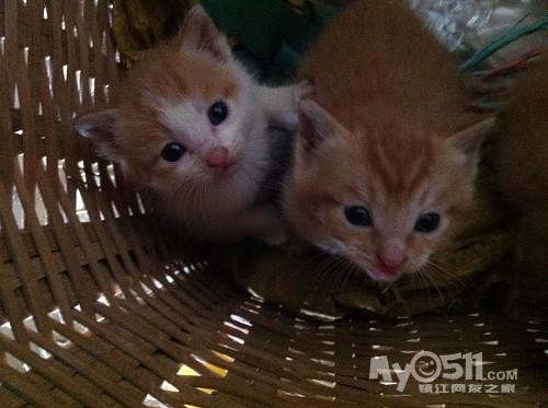 为两只可爱的小猫咪找个新家