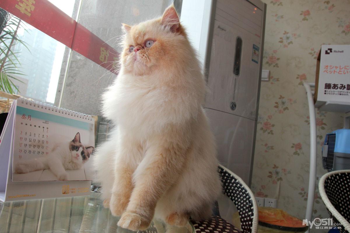 03 梦溪论坛 猫狗总动员 宠物交易 03 牵手精灵宠物生活馆于3月18