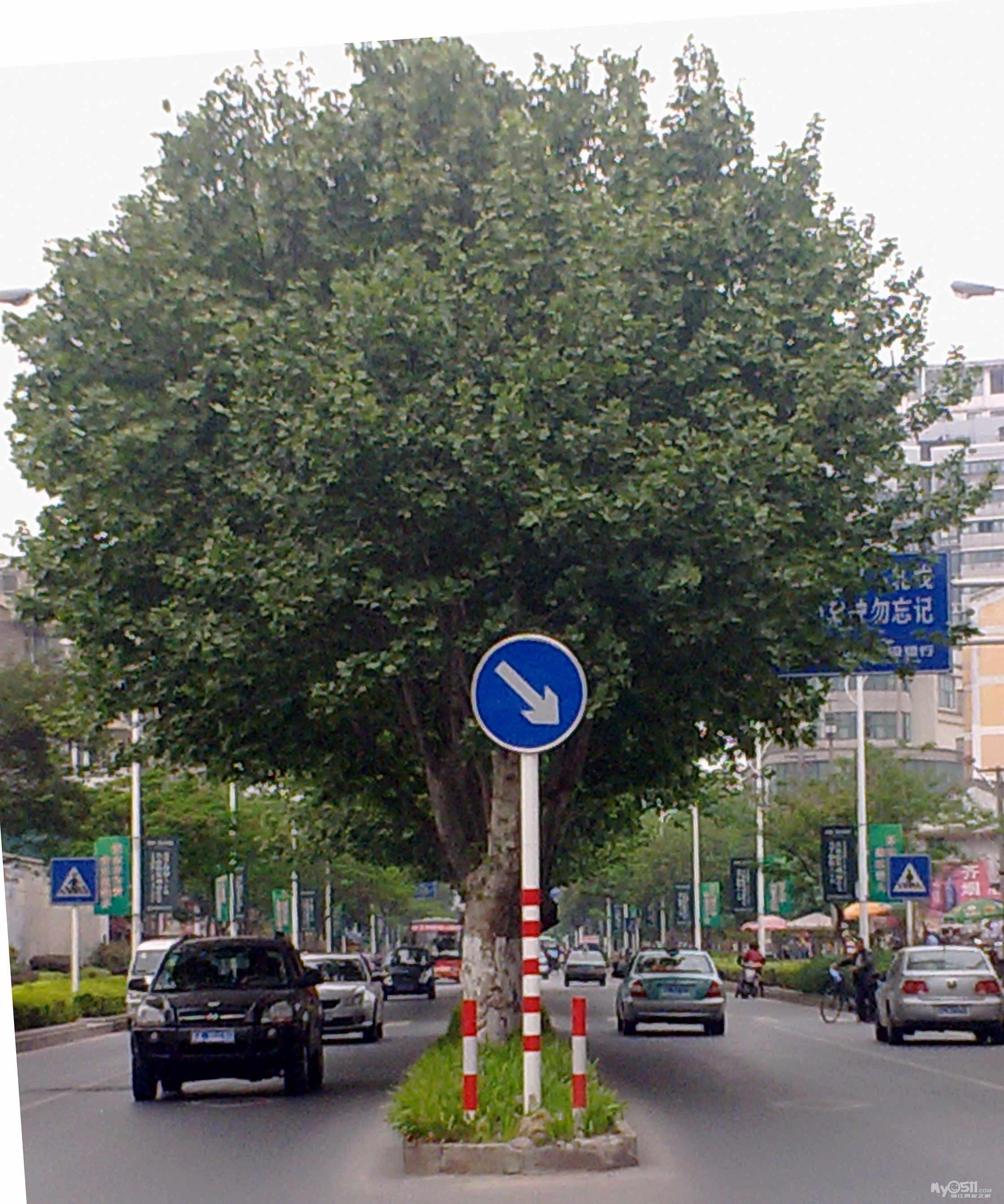 电子制造 quote: 原帖由  ybb163 于 13-5-11 23:52 发表  树都丑死