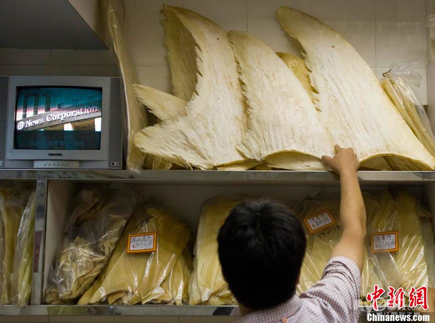 凤凰网视频 日本残大批海豚海水一大片染红