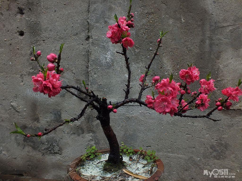 院子里有桃树扩句
