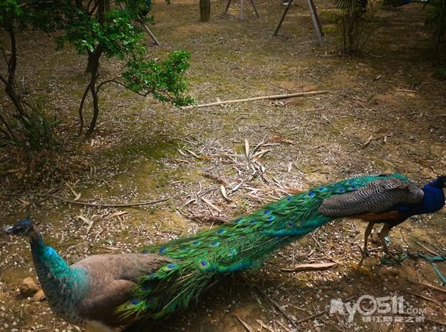 镇江仅存的动物园在南山竹林寺