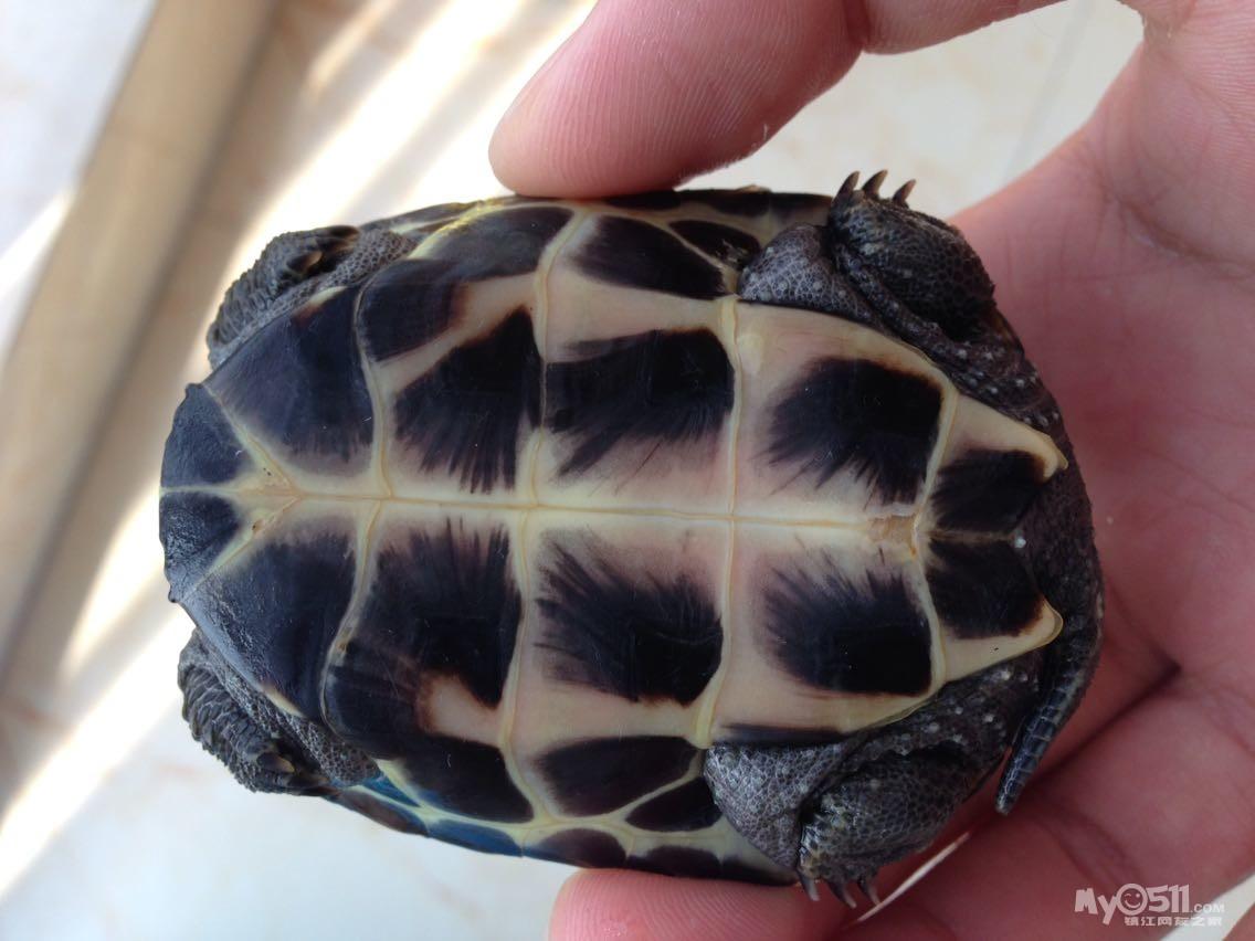 在小龟,还没有冬眠,请大神赐教