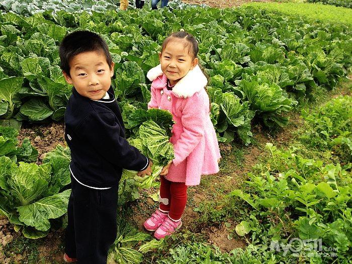 农民伯伯种植的蔬菜真好呀~~~-2014 2015 大一班 家长请进 蒋老师 陈图片