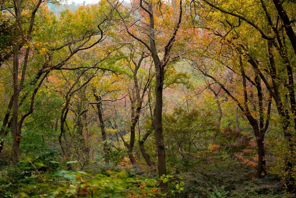 大一班:美术活动《蜡刮画:秋天的树林》-梧桐树幼儿