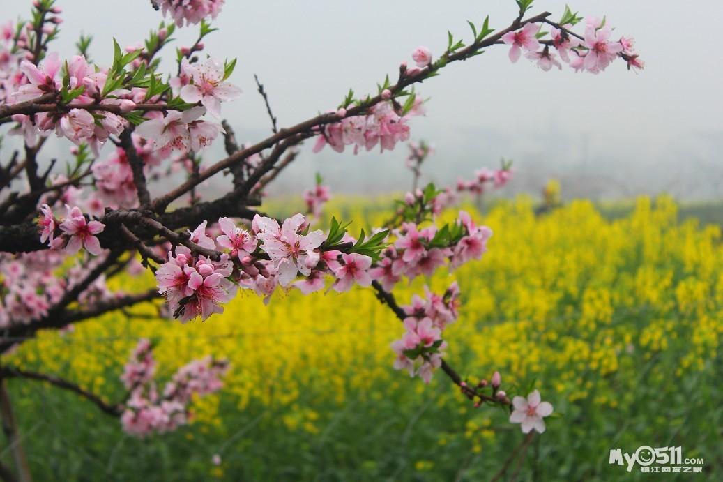 骑行计划:4月4日(周六)丹阳许杏虎故居,桃花岛里交好运,看看15年里谁