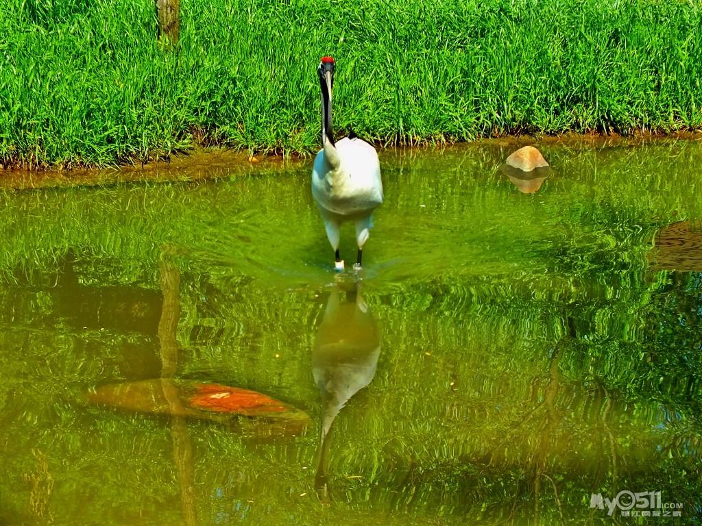 扬州茱萸湾风景区(动物园) - 镇江知青 - 梦溪论坛