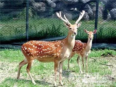 镇江世业洲动物园拍到的食草动物们