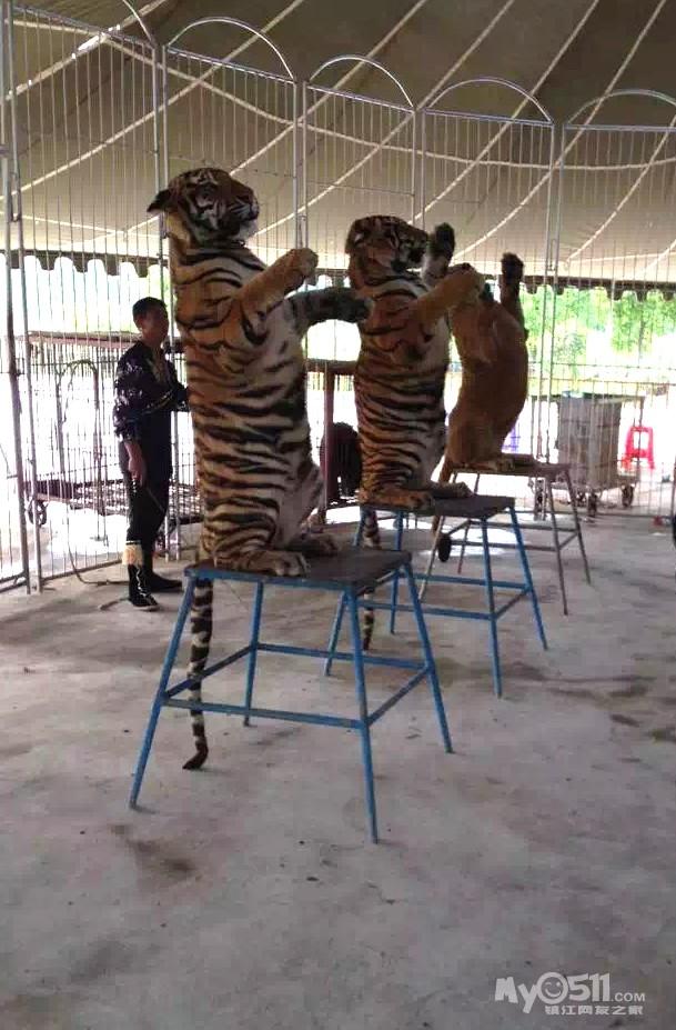 镇江世业洲动物园看到的动物表演