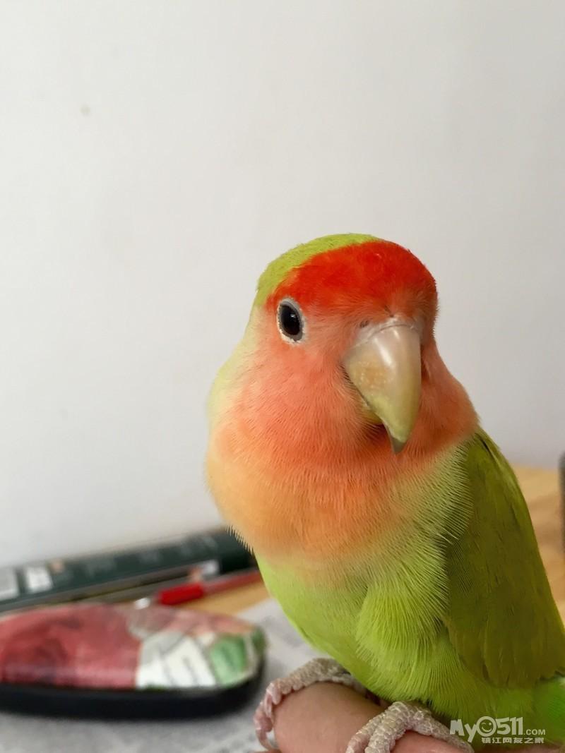 动物 鸟 鸟类 鹦鹉