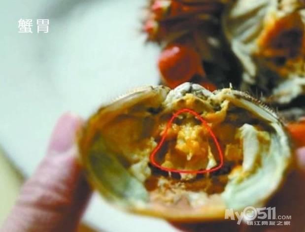 螃蟹怎么看公母_螃蟹公母怎么分