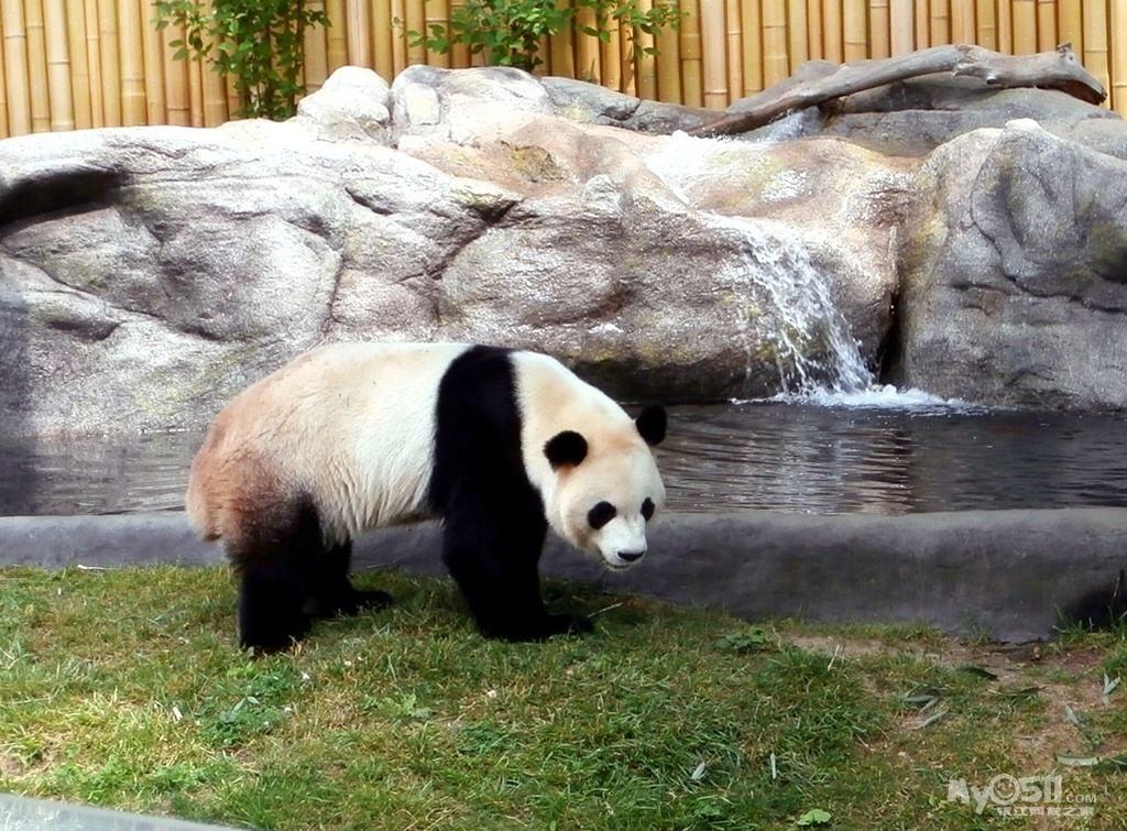 南山竹海,吴越第一峰,鸡鸣古村,熊猫馆一日