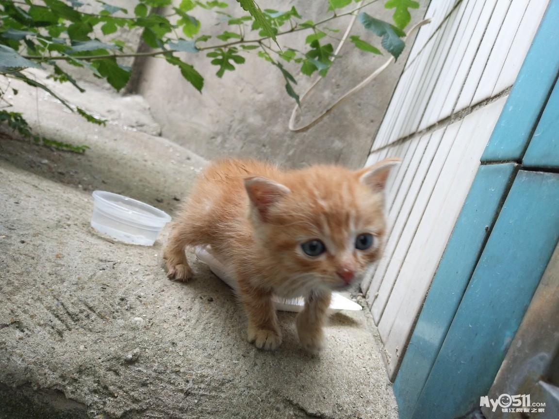 亲人可爱小橘猫,等待主人免费带回家